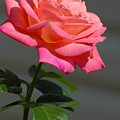 Flowers 186 by Joyce StJames