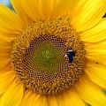 Flowers 188 by Joyce StJames