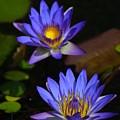 Flowers 2 by Lisa Spero
