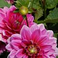 Flowers 225 by Joyce StJames