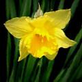 Flowers 26 by Joyce StJames