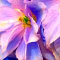 Flowers 31 by Ken Lerner