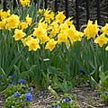 Flowers 37 by Joyce StJames