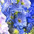 Flowers 41 by Ken Lerner