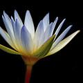 Flowers 44 by Ben Yassa