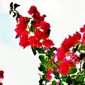 Flowers 5 by Danielle Valencia D