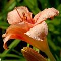 Flowers 52 by Joyce StJames
