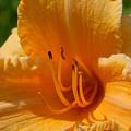 Flowers 59 by Joyce StJames
