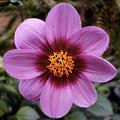 Flowers 65 by Ben Yassa