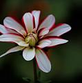 Flowers 66 by Ben Yassa