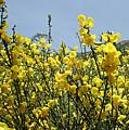 Flowers 7 by LDS Dya