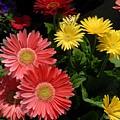Flowers 728 by Joyce StJames