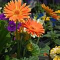 Flowers 730 by Joyce StJames