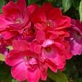 Flowers 732 by Joyce StJames