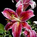 Flowers 733 by Joyce StJames