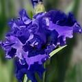 Flowers 734 by Joyce StJames