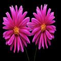 Flowers 74 by Ben Yassa