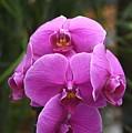 Flowers 822 by Joyce StJames