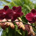 Flowers 823 by Joyce StJames