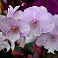 Flowers 824 by Joyce StJames