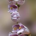 Flowers Along Trail by Dan Friend