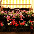 Flowers And Awning In Venice by Michael Henderson