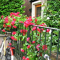 Flowers And Bikes Oh My by Phyllis Kaltenbach
