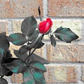 Flowers And Bricks by Elise Samuelson