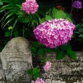 Flowers And Stone by Robin Lewis