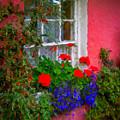 Flowers At An Irish Cottage by James Truett
