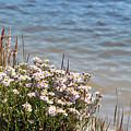 Flowers At The Lake by Linda Benoit