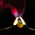 Flower's Aura by Mary Halpin