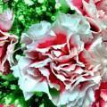Flowers by Carlos Avila