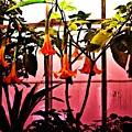 Flowers by Crystal Webb