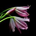 Flowers by Dorival Moreira