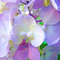 Flowers Hydrangeas Art Prints Floral Garden Baslee Troutman by Baslee Troutman