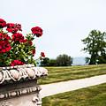 Flowers In Bloom by Joel Fernandez