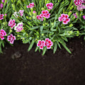 Flowers In Grass Growing From Natural Clean Soil by Michal Bednarek