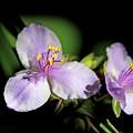 Flowers In Natural Light by Deborah Benoit