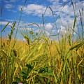 Flowers In The Wheat by Debra and Dave Vanderlaan