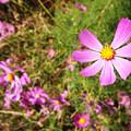 Flowers In Washington Park by Korynn Neil