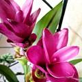 Flowers by Katherine W Morse