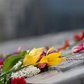 Flowers Memory by Ivan Chobanyk