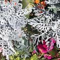Flowers Of Boca I by Chris Andruskiewicz