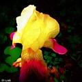 Flowers Of The Universe by Debra Lynch