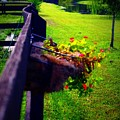 Flowers On A Fence by Jill Tennison
