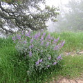 Flowers On A Foggy Day by Suzanne Leonard