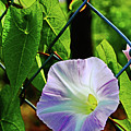 Flowers On The Fence 1 by Don Baker