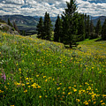 Flowers On The Hillside by Rick Strobaugh