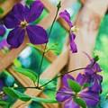 Flowers Purple by Eric  Schiabor